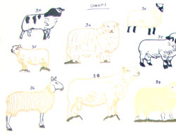 sheep1th