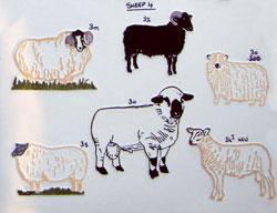 sheep4th