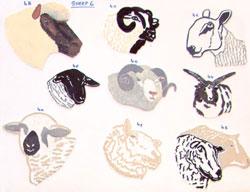 sheep6th