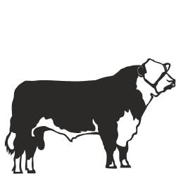hereford bull1-250x250